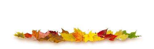Autumn falling leaves Stock Image