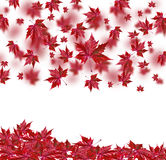 Autumn falling leaves isolated on white background Royalty Free Stock Photo