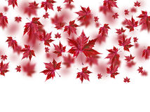 Autumn falling leaves isolated on white background Royalty Free Stock Images