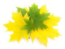 Autumn falling leaves. Isolated on white background stock photos