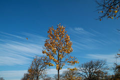 Autumn falling leaves leaves on background trees Royalty Free Stock Photos