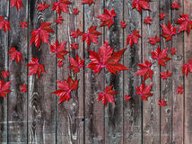 Autumn falling leaves lying on wooden background Royalty Free Stock Photos