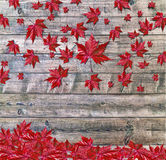 Autumn falling leaves lying on wooden background Royalty Free Stock Images