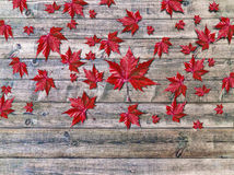 Autumn falling leaves lying on wooden background Royalty Free Stock Image