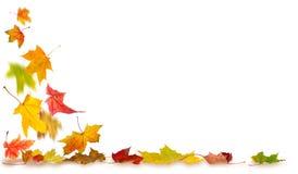 Autumn falling leaves Stock Photos
