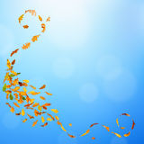 Autumn falling leaves. Autumn oak leaves falling down on natural background Royalty Free Stock Image