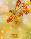 Autumn,  falling leaves with reflection Stock Photos
