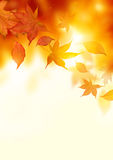Autumn Falling Leaves Stock Photography