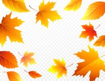 Autumn falling leaves on transparent checkered background. Autumnal foliage fall leaf flying in wind motion blur. Vector Stock Photography