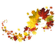 Autumn falling leaves royalty free stock photos