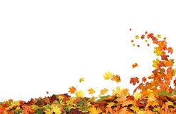 Autumn falling leaves. On white background