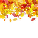 Autumn Falling Leaves. On White Background Vector Royalty Free Stock Photography