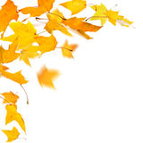 Autumn falling leaves Stock Images
