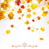 Autumn Falling Maple Leaves Image stock