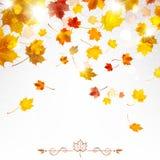 Autumn Falling Maple Leaves Imagen de archivo
