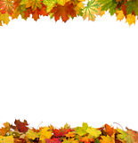 Autumn falling maple leaves Royalty Free Stock Photos