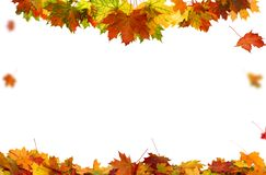 Autumn falling maple leaves on white background royalty free stock photo