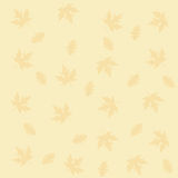Autumn falling maple and oak leaves, pattern,  on white background.  Stock Photos