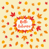 Autumn falling maple and oak leaves, pattern,  on white background.  Stock Photography