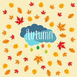 Autumn falling maple and oak leaves, pattern,  on white background.  Royalty Free Stock Photos