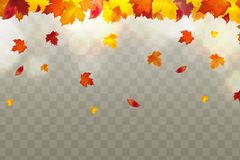 Autumn falling red, yellow, orange, brown leaves on transparent background. Vector autumnal foliage fall of maple leaves. Design concept for seasonal holiday royalty free illustration