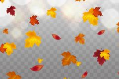 Autumn falling red, yellow, orange, brown leaves on transparent background. Vector autumnal foliage fall of maple leaves. Design concept for seasonal holiday vector illustration