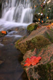 Autumn Falls. Falls in the autumn forest with leaves on the rocks Stock Photography