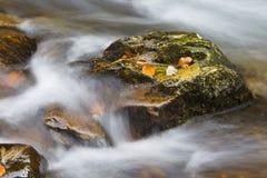 Autumn falls Royalty Free Stock Photo