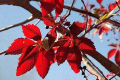 Autumn fantasy stock images