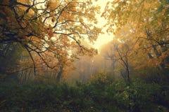Autumn Fantasy Royalty-vrije Stock Afbeeldingen