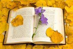 Autumn fantasy Stock Image