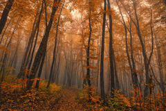 Autumn fantasy. Fantasy landscape of the foggy autumn forest royalty free stock photo