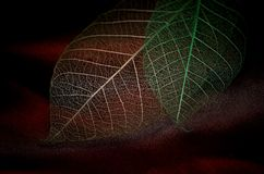 Autumn fantasy... Leaf close-up Stock Photography