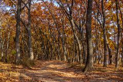 Autumn in the Far Eastern Russian forest. Sunny day and dirt road royalty free stock image