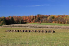 Autumn on the Farm. Farm field with corn, and bales of hay.Autumn colors cover trees in back. Blue sky Royalty Free Stock Photos