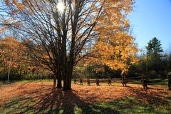 Autumn farm royalty free stock image