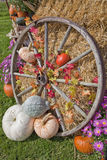 Autumn Display Royalty Free Stock Photo