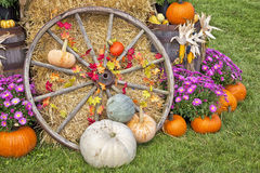 Autumn Display Royalty Free Stock Images