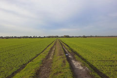 Autumn farm track Royalty Free Stock Photography