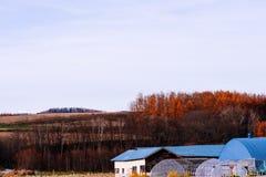 Autumn Farmland debajo del cielo claro fotos de archivo libres de regalías