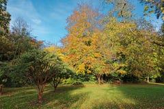 Autumn in Farmleigh Stock Photography