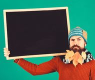 Autumn fashion ad and presentation concept. Hipster with confused face. And beard full of autumn leaves. Man in hat holds blackboard on green background. Guy stock images