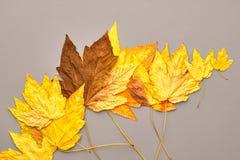 Autumn Fashion Fall lässt Hintergrund weinlese stockfoto