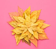 Autumn Fashion. Fall Leaves Background. Vintage. Stock Image