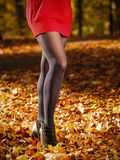 Autumn fashion. Female legs in black pantyhose outdoor. Autumn fashion. Female legs in black pantyhose and stylish fashionable shoes boots, outdoor golden leaves stock images