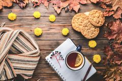 Autumn fashion seasonal concept Scandinavian knitted scarf cup hot black tea. Coffee homemade oatmeal cookies Fall fallen maple leaves on wooden table with royalty free stock photo