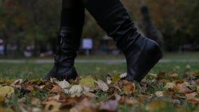 Autumn Fashion Weibliche Beine in der schwarzen Strumpfhose und in den stilvollen modernen Schuhstiefeln, goldene Blätter im Frei stock footage