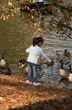 Autumn Feeding. Young child feeding geese at Central Park pond Royalty Free Stock Photo
