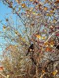 Autumn feeding Royalty Free Stock Photos