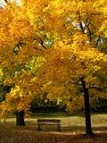 Autumn feeling Royalty Free Stock Photos